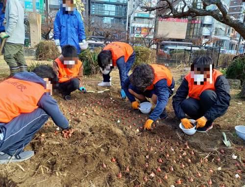 チューリップ植栽ボランティアをしました